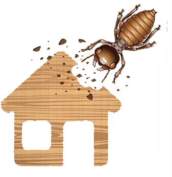 Wood-destroying Insect Inspection